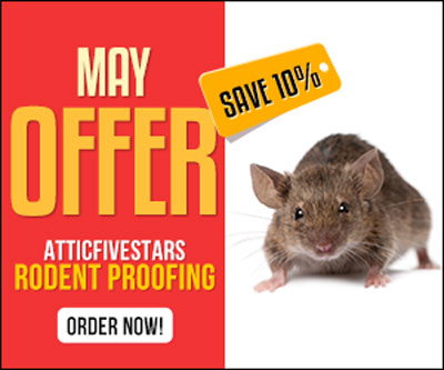 Rodent Proofing Your Home Rat Proofing Services Rodent